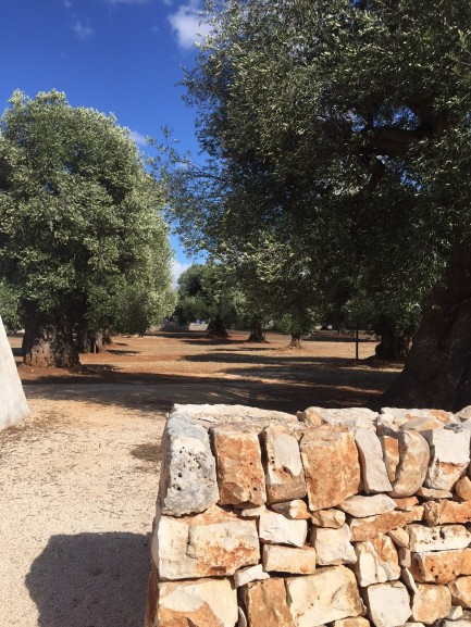 Masseria Le Carrube - Olive trees