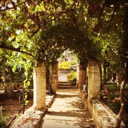 Torre Coccaro - Vegetable garden